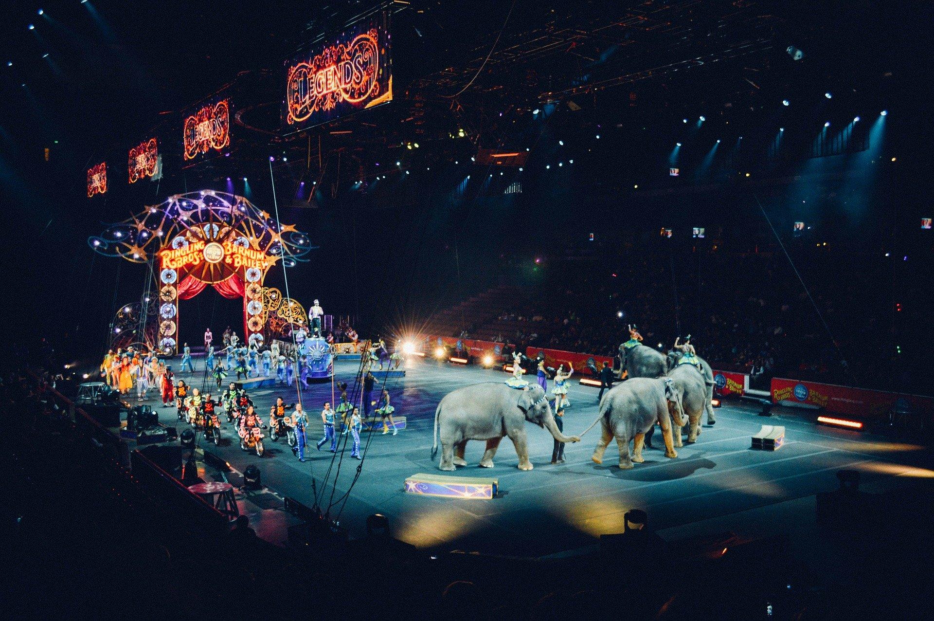 Les animaux sauvages dans les cirques itinérants progressivement interdits