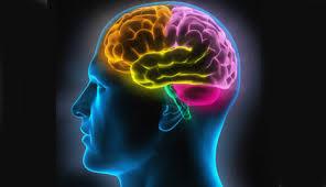 Le cerveau utilisé à seulement 10% de ses capacités, un mythe