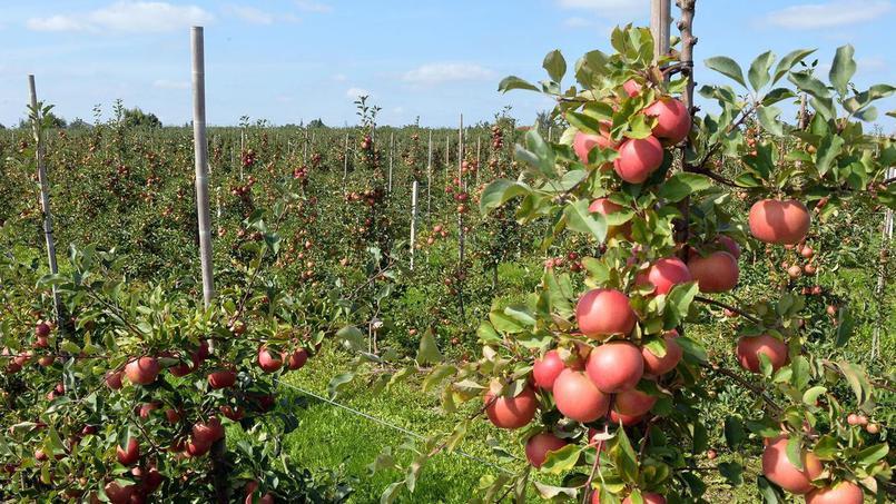 Des fruits invendus aux confiseries