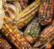 Un rapport de l'Onu révèle l'étendue mondiale du gaspillage alimentaire