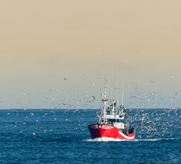 Pêche : les ministres européens se réunissent sur les quotas