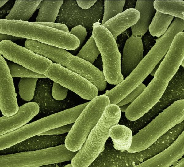 8.000 morts au Japon à cause de deux bactéries antibiorésistantes