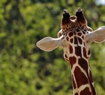 Les espèces en voie de disparition de plus en plus menacées