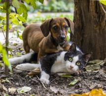 Taiwan interdit la consommation de chiens et de chats