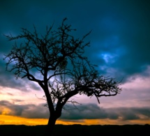 Les arbres, façonnés entre vent et lumière