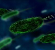Santé : éradication de deux souches de poliovirus sauvage sur trois