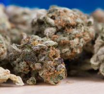 La France lance l'expérimentation du cannabis thérapeutique