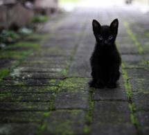Municipales : à Rennes LFI présente un chat… et ce n'est pas original