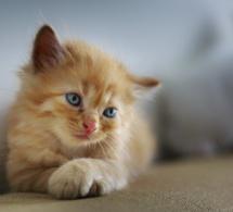 Covid-19 : les adoptions d'animaux sont de nouveau autorisées