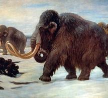 Une étude met en lumière les facteurs de la disparition du mammouth