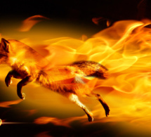 Crise au conseil d'administration de Firefox