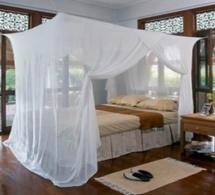 Moustiques : le chikungunya ne passera pas par moi