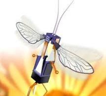 RoboBees, des robots à la place des abeilles