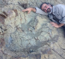 Découverte d'une empreinte d'un dinosaure de douze mètres de haut en Bolivie